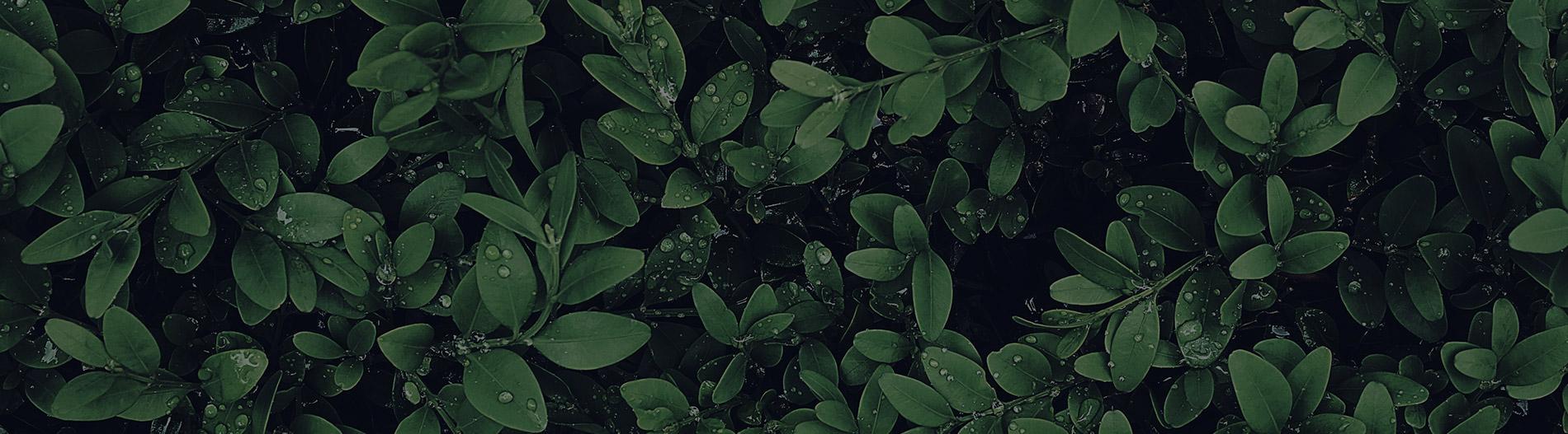 Singapore Botanic Gardens | Event Butler